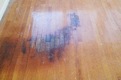 pet stain damage on hardwood floors